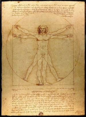 Chiều dài các bộ phận trên cơ thể trong bức Vitruvian Man cũng tuân theo tỉ lệ vàng