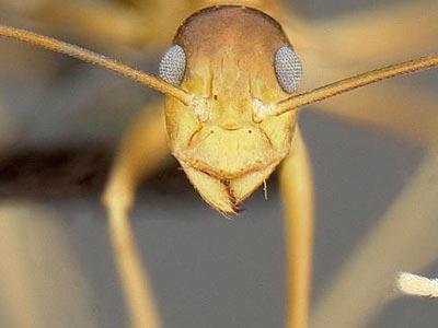 Cuộc chiến ác liệt chống sinh vật xâm lăng