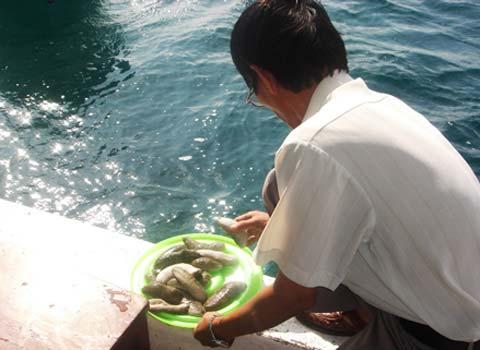 Thả hàng nghìn giống hải sản quý xuống biển