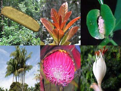 2009 bội thu những khám phá thực vật
