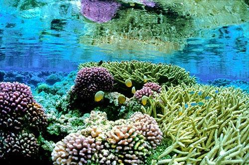 10 dấu ấn môi trường năm 2009
