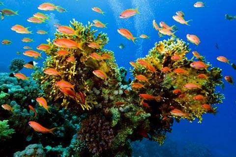 Thiên nhiên kỳ thú trong lòng biển Đỏ