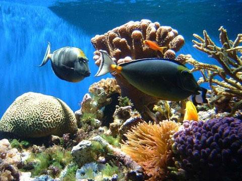 Phát hiện điều kiện giúp san hô thoát họa tuyệt chủng