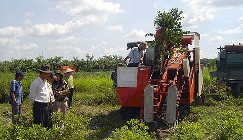 Máy thu hoạch lạc liên hoàn