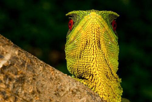 Những sinh vật kỳ quặc ở rừng mưa Ecuador