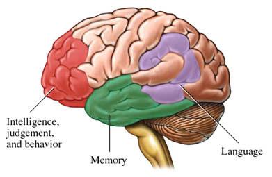 Phát hiện ra gen gây bệnh mất trí nhớ ở người