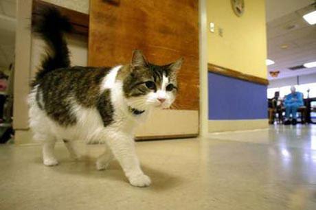 Câu chuyện về con mèo đưa người xấu số lên thiên đường