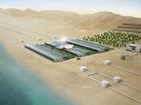 Xanh hóa sa mạc bằng công nghệ