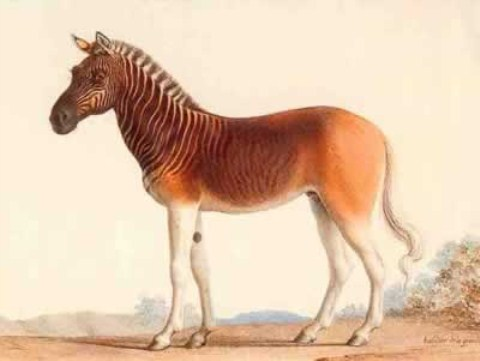 10 loài thú tuyệt chủng kỳ lạ