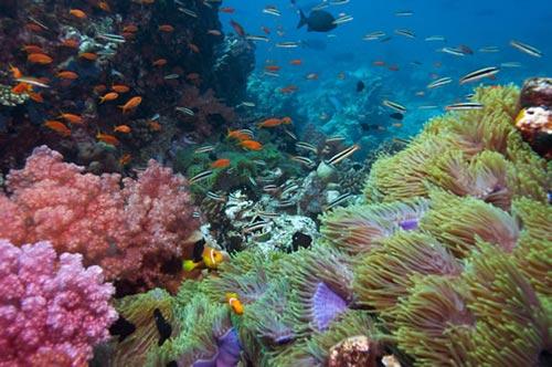 Thiết bị mô phỏng môi trường biển