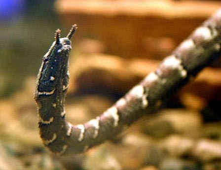 'Đôi mắt' kỳ diệu của loài rắn nước