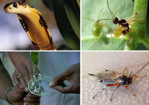 Những phát hiện mới nhất về các loài có độc