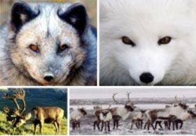 Những bậc thầy hóa trang trong thế giới động vật