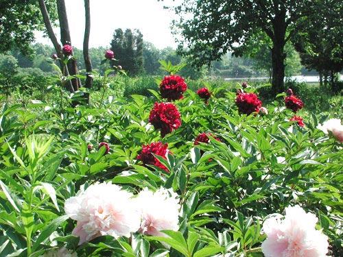 Tia hồng ngoại giúp thực vật quang hợp