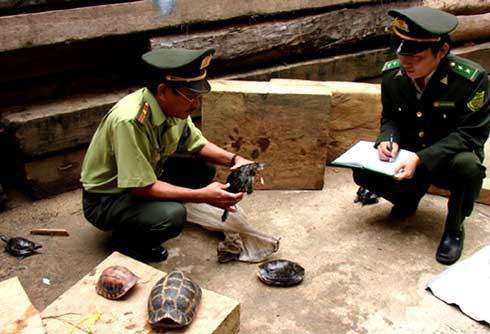 Lập trạm cứu hộ bảo tồn rùa quý hiếm Trung Bộ