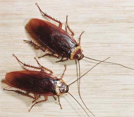 Nung nhà để diệt côn trùng