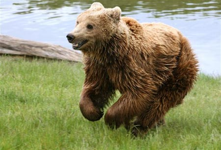 Khủng hoảng kinh tế cứu mạng gấu