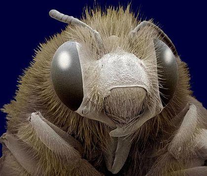 """Ảnh 3D """"sởn gai ốc"""" về côn trùng"""