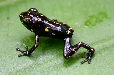 Những con ếch đổi màu