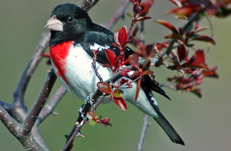 Các loài chim nhỏ dần vì biến đổi khí hậu