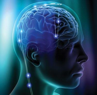 Não bộ của con người đang ngày càng thu nhỏ