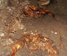 Bí ẩn ngôi mộ không đầu của người Maya cổ đại