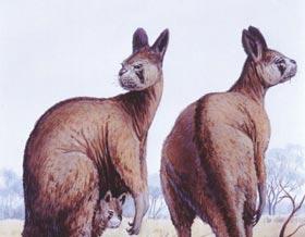 Người tiền sử đã từng diệt chủng các loài thú lớn