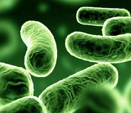 Xác định danh tính người nhờ vi khuẩn