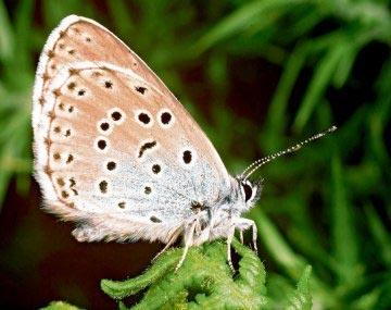 Châu Âu sẽ không còn bướm?
