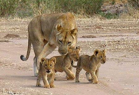 Internet là hiểm họa với động vật hoang dã