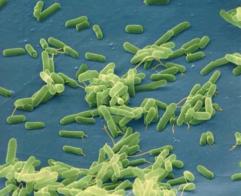 Béo - Lỗi tại vi khuẩn