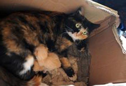 Mèo đực sinh 3 mèo con