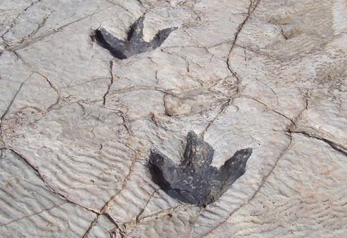 Quần thể dấu chân loài tiền khủng long tại Italy