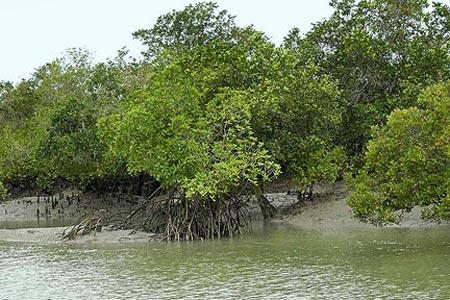 Một đảo tại châu Á biến mất