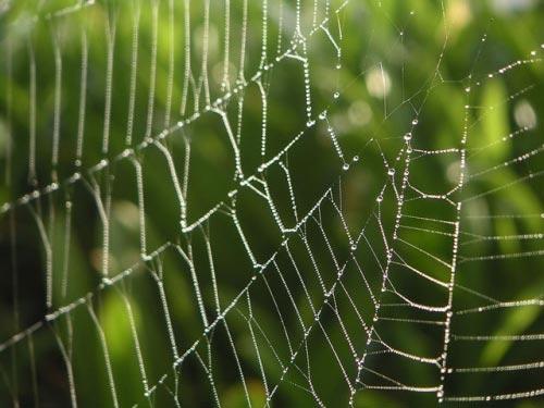 Sản xuất siêu vật liệu dựa trên cấu trúc tơ nhện