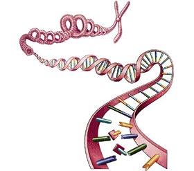Đột biến 1 gen có thể gây ra nhiều bệnh ung thư