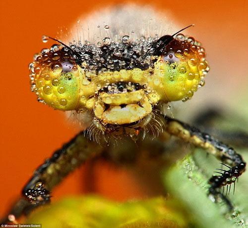 Săn ảnh côn trùng tắm sương