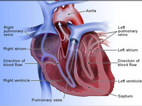 Protein tăng trưởng thần kinh chống bệnh tim