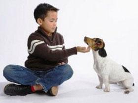 Chó làm tăng nguy cơ mắc hen suyễn ở trẻ nhỏ