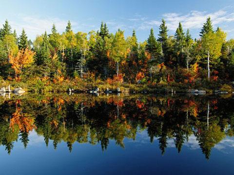 Thiên nhiên trong hồ nước