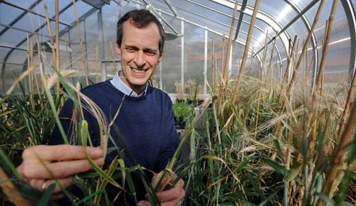 Tạo giống lúa sống trên đất nhiễm mặn