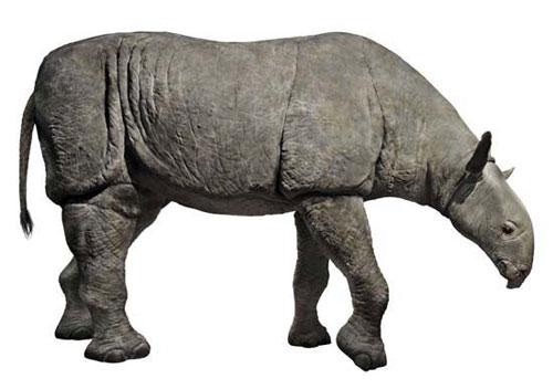 10 loài động vật có vú kỳ lạ