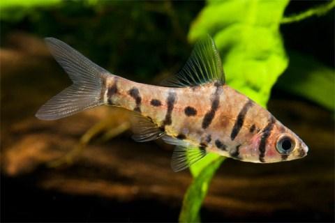 Những sinh vật mới tại rừng nhiệt đới Borneo