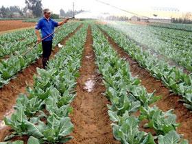 Đẩy mạnh ứng dụng nông nghiệp công nghệ cao