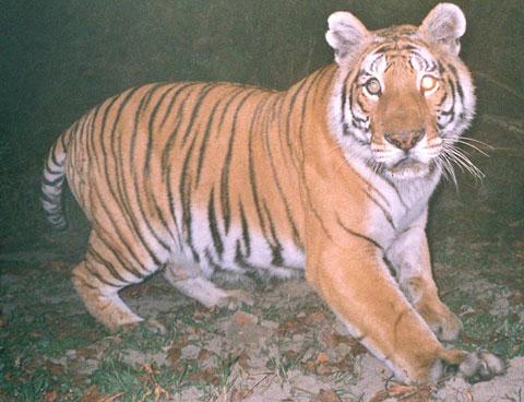 Thiên đường của hổ