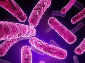 Manh mối để phát triển vắcxin chống khuẩn E.coli