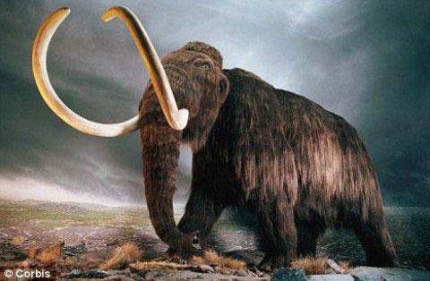 Hồi sinh loài voi ma mút