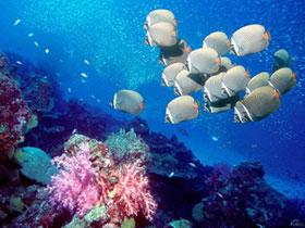 Bảo vệ sự sống các sinh vật trong lòng đại dương