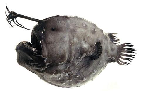 Những con cá kỳ dị nhất hành tinh