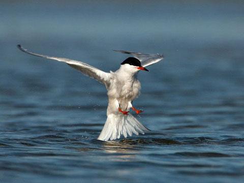 Muôn vẻ chim nước